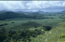 Mauritius - die Zuckerrohrinsel