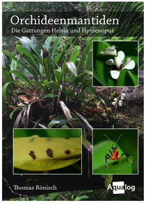 Orchideenmantiden, Thomas Rönisch