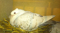 Brünette auf dem Nest