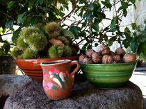 Im Herbst werden nicht nur die Oliven reif.