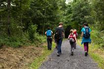 gemütlicher Weg durch den Wald