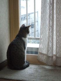 雪見中の小梅ちゃん^^