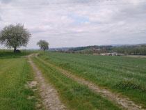 Friedwagn - Blick Richtung Birkenallee