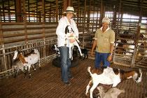 Maria Detert lehrt angepasste Tierhaltung