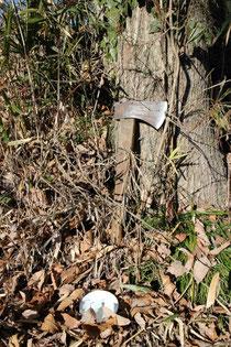 「よき」を木に立てかける。