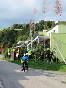 """Das Dorf Zell ist Schweizermeister im Aufstellen von """"Geburtsbäumen""""!"""