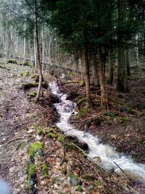 Le ruisseau de la Thuile