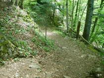 Le sentier dans le bois