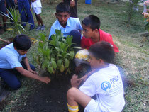 tree planting by school children
