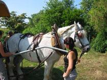 Location de roulotte aménagée tirée par un cheval