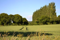 Arable farmland surrounding Crondall