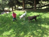 Kind mit Hunde