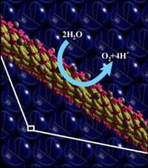 Quando le molecole di acqua entrano in contatto con il virus (in giallo) caricato di energia dal pigmento (in rosa) e dal catalizzatore (le sferette marroni) si scindono in ossigeno e idrogeno (© Angela Belcher/MIT)