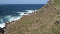 Steilküste am Leuchtturm von Stoer