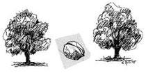 Denkbild der Lehrkunst Didaktik: Baum - Nuss - Baum