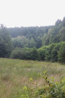 im Maisenbachtal