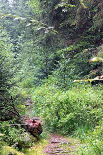 auf dem Pfad ins Waldmoor