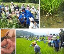 いきものみっけファームin松本トウモロコシ収穫&生物観察