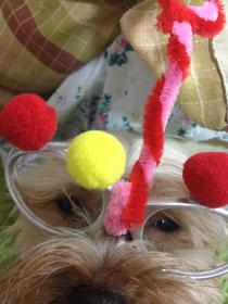 アートメガネ犬