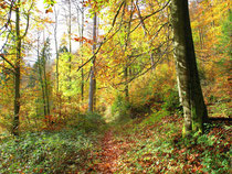 Indian Summer in de Palz