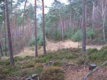 So mitten im Wald