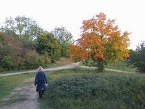 Herbst im Bruch