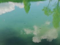 Leben unter der Oberfläche
