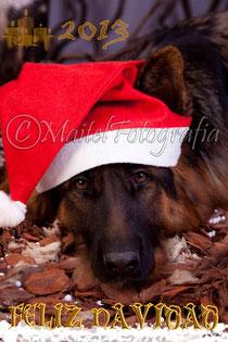 Felicitación Canina de Navidad