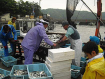 お魚が次々に船から引き上げられました。