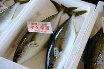 ピチピチ&とれとれのお魚がいっぱい! 8/19のオプションはセリとお魚センターの見学です!