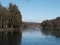 鳥見亭側から見たボート池