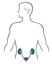 Behandlung des Urogenitaltrakts durch Osteopathie, Ernährungsberatung und Pflanzenheilkunde durch Heilpraktiker in Hamburg-Bergedorf