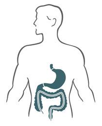 Behandlung des Magen-Darm-Trakts durch Osteopathie, Ernährungsberatung und Pflanzenheilkunde in der Praxis von Miriam Reinhard am Sachsentor in Hamburg-Bergedorf