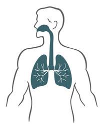 Behandlung des Atmungssystems durch Osteopathie und Pflanzenheilkundedurch Miriam Reinhard, Osteopathin am Sachsentor in Bergedorf
