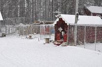 Huskyfarm Lapplands Drag im ersten Schnee