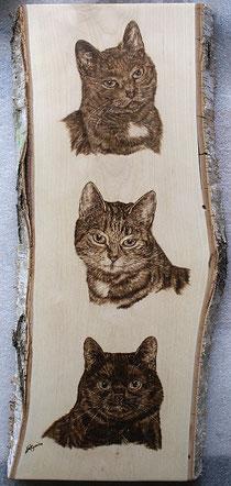 Tierportrait 3 Katzen