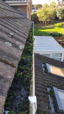 Gutters full of moss and debris in Exeter
