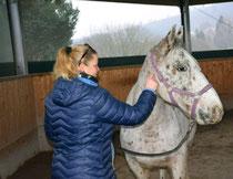 Aufbau von Vertrauen, um Ängste vor einem Pferd zu verlieren