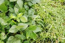 美菜ガルテンふるかわ きみこの畑奮闘記自然支援として無肥料無農薬