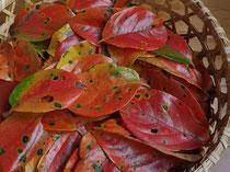 真の日本料理「美菜ガルテンふるかわ」紅柿の葉