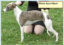 Rheia Ayort Back