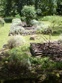Carré en plessis (tressage) de châtignier maintenant la terre et le paillage autour d'un arbuste de jardin