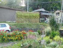 稲を乾燥させるためのハザ