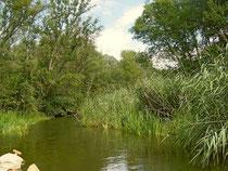 Eine wildromantische Landschaft wartete auf die Kanufahrer bei den beiden Exkursionen am ersten Augustwochenende