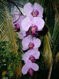 Orchideen, immer wieder schön