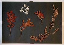 Bild:Pflanzen,Lappland,Schweden,Glas,David Brandenberger,d-t-b.ch,d-t-b,