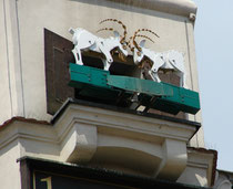 ケンカする2匹のヤギ