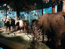 自然森林博物館