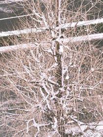 エータのエレベーターホールから見える木です。