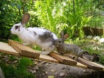 Außengehege Kaninchen